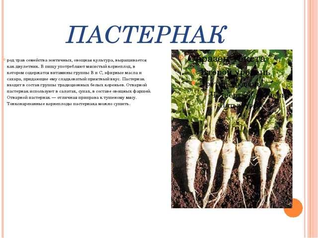 ПАСТЕРНАК род трав семейства зонтичных, овощная культура, выращивается как дв...