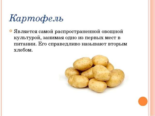 Картофель Является самой распространенной овощной культурой, занимая одно из...