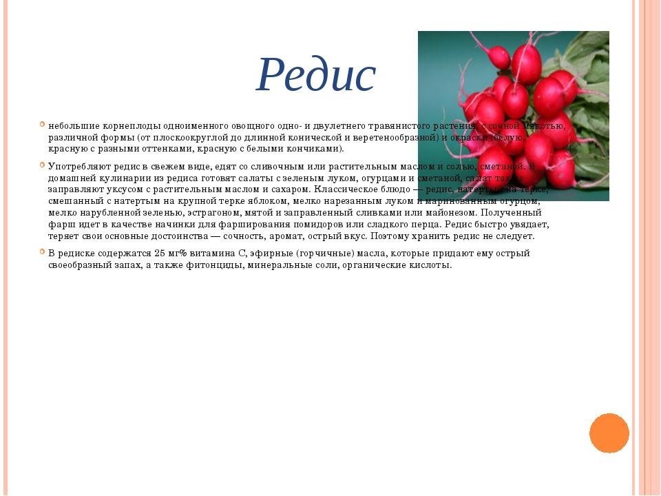 Редис небольшие корнеплоды одноименного овощного одно- и двулетнего травянист...