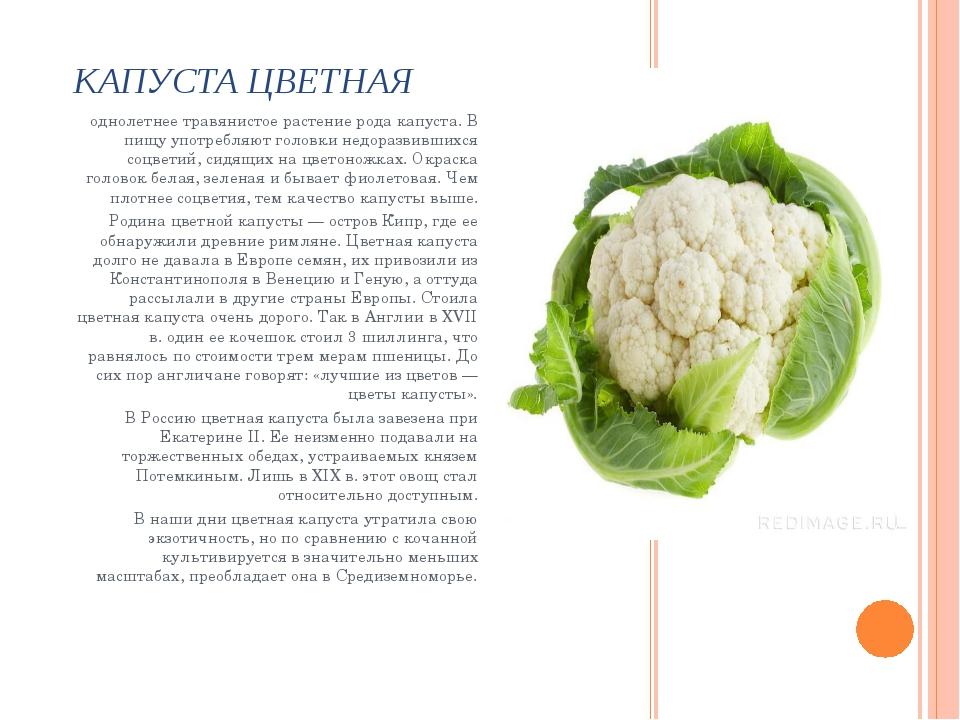 КАПУСТА ЦВЕТНАЯ однолетнее травянистое растение рода капуста. В пищу употребл...