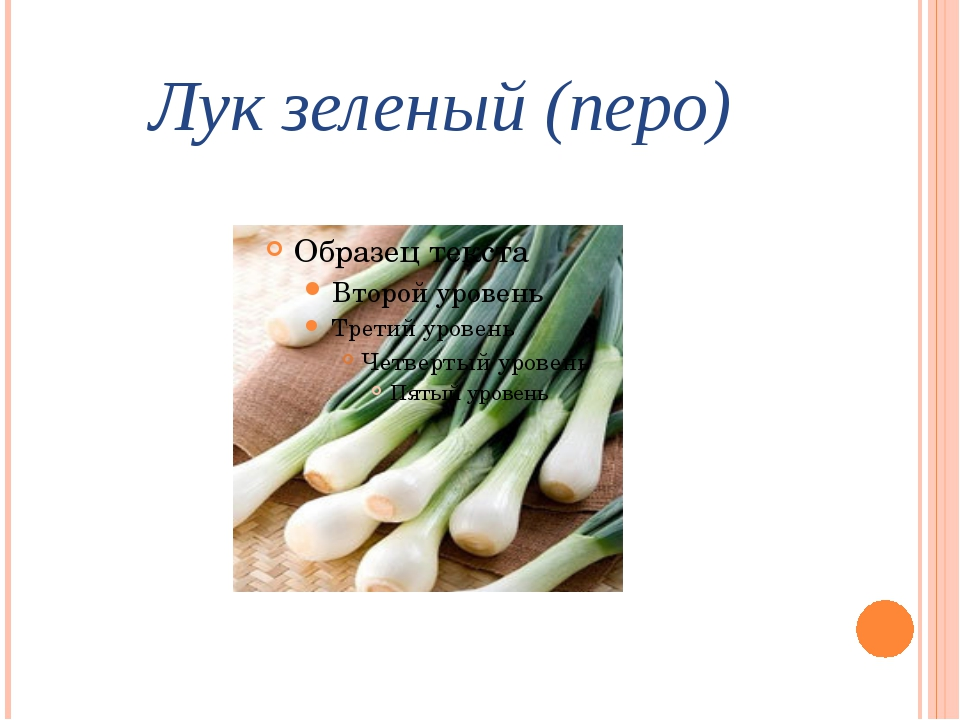 Лук зеленый (перо)