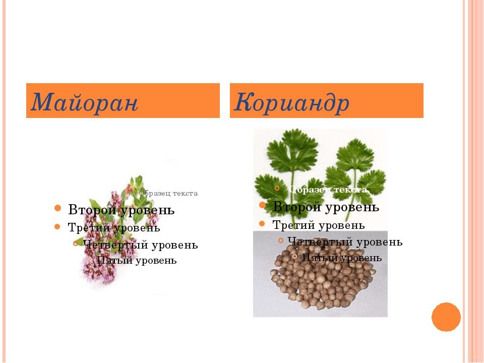 Майоран Кориандр