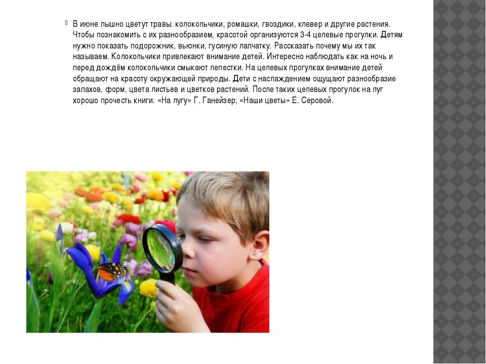 В июне пышно цветут травы: колокольчики, ромашки, гвоздики, клевер и другие...