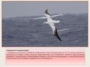 Сведения из энциклопедии: Альбатросы относятся к семейству океанических птиц