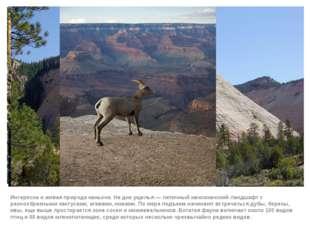 Интересна и живая природа каньона. На дне ущелья— типичный мексиканский ланд