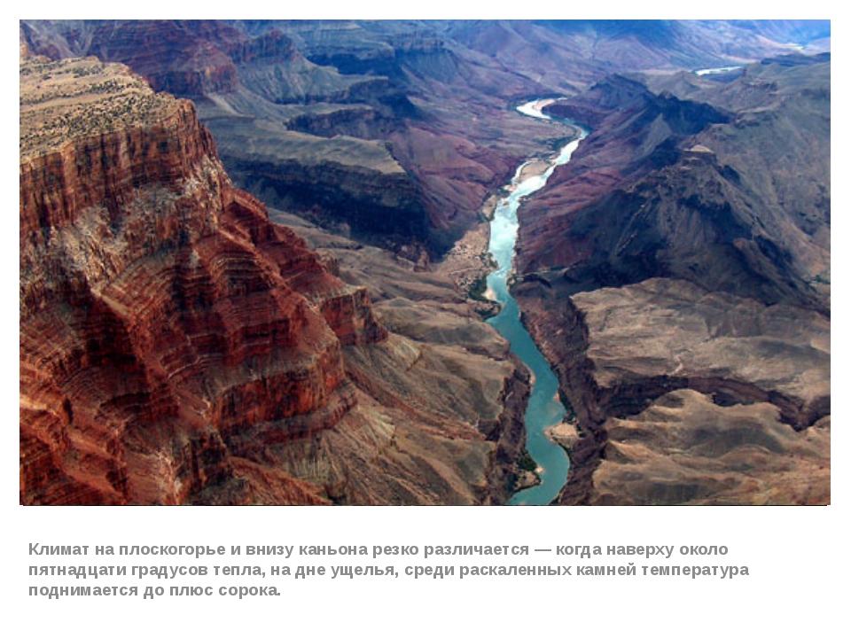 Климат на плоскогорье и внизу каньона резко различается— когда наверху около...