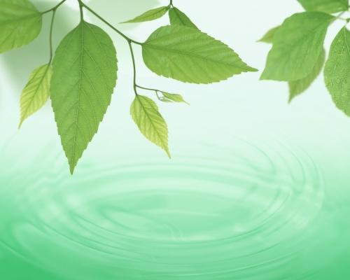 C:\Documents and Settings\юра\Рабочий стол\1268767865_forest-sun-water-6.jpg