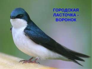 ГОРОДСКАЯ ЛАСТОЧКА - ВОРОНОК