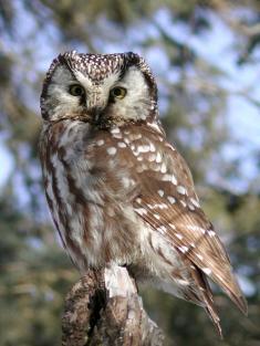 owl235x313.jpg
