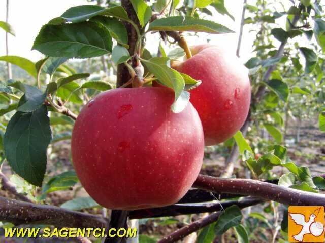 http://sagentci.com/wp-content/uploads/2012/11/gala_must.jpg