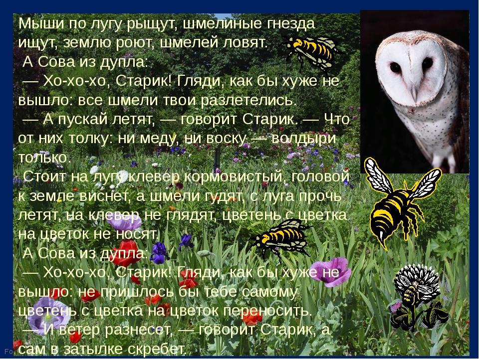 Мыши по лугу рыщут, шмелиные гнезда ищут, землю роют, шмелей ловят. А Сова и...
