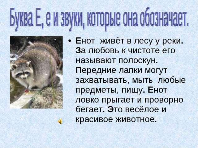 Енот живёт в лесу у реки. За любовь к чистоте его называют полоскун. Передние...