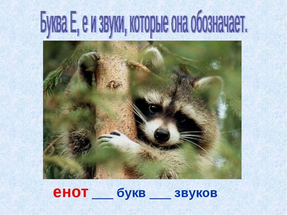 енот ___ букв ___ звуков