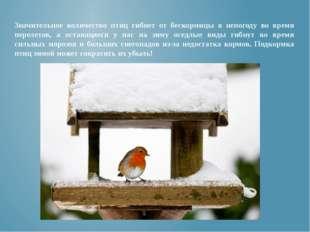 Значительное количество птиц гибнет от бескормицы в непогоду во время перелет