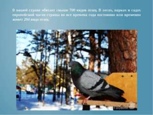 В нашей стране обитает свыше 700 видов птиц. В лесах, парках и садах европейс