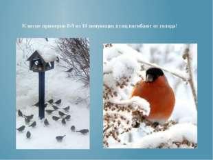 К весне примерно 8-9 из 10 зимующих птиц погибают от голода!