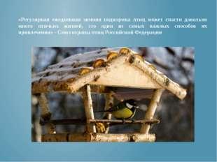 «Регулярная ежедневная зимняя подкормка птиц может спасти довольно много птич