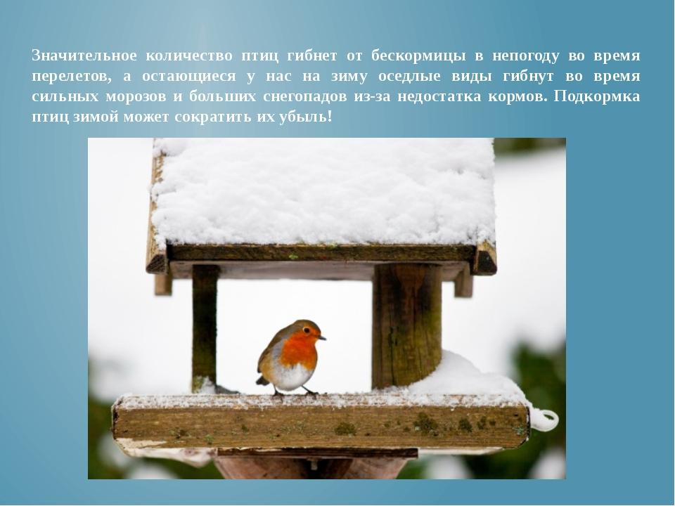 Значительное количество птиц гибнет от бескормицы в непогоду во время перелет...