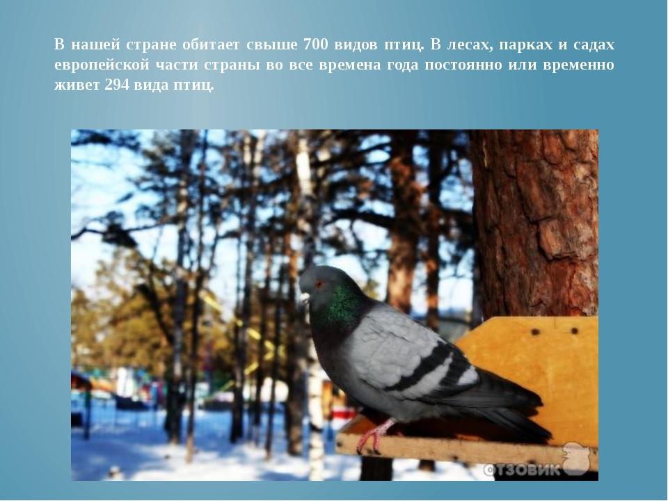 В нашей стране обитает свыше 700 видов птиц. В лесах, парках и садах европейс...