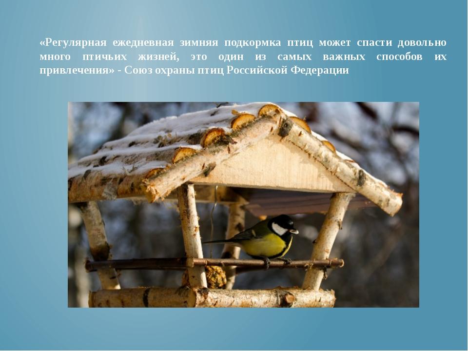 «Регулярная ежедневная зимняя подкормка птиц может спасти довольно много птич...