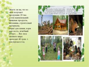 Знаете ли вы, что из леса получают продукцию 20 тыс. сотен наименований: пище