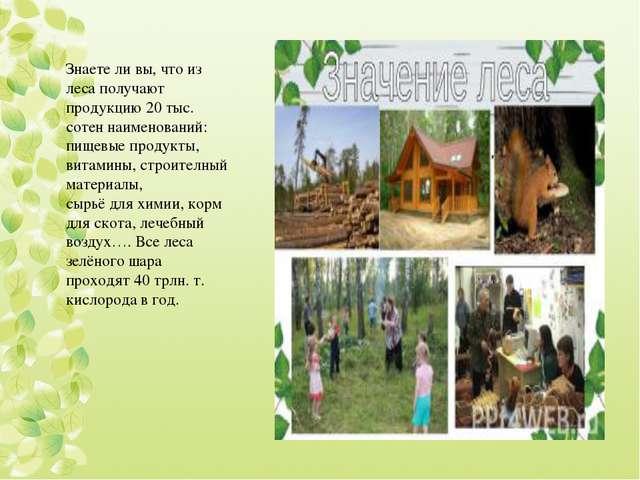 Знаете ли вы, что из леса получают продукцию 20 тыс. сотен наименований: пище...