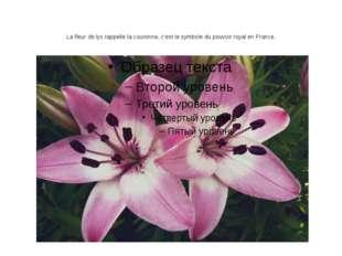 La fleur de lys rappelle la couronne, c'est le symbole du pouvoir royal en Fr