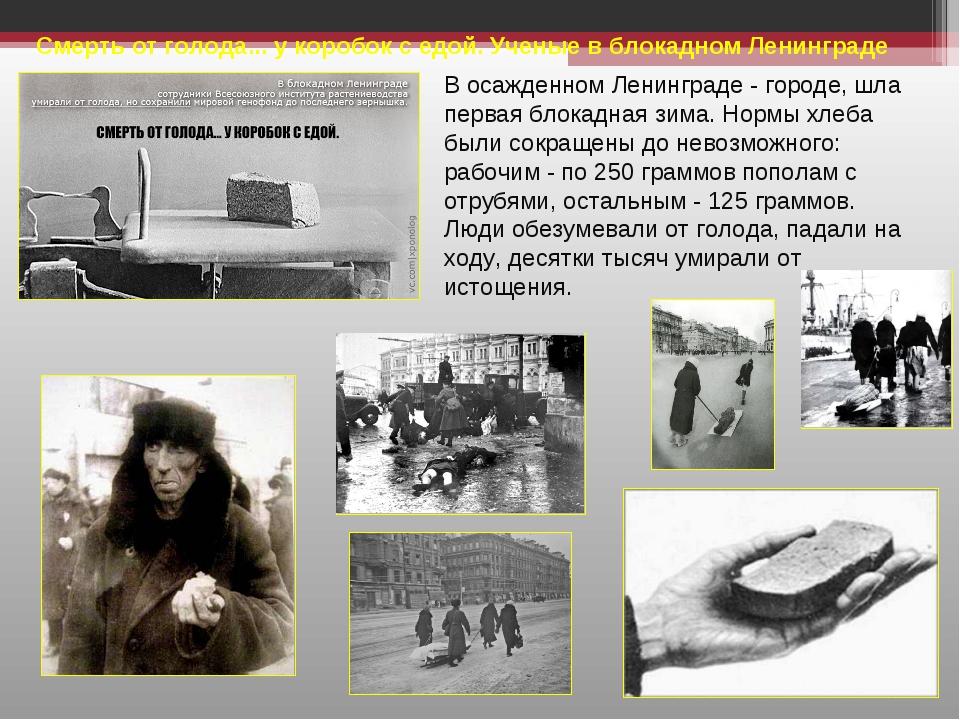 Смерть от голода... у коробок с едой. Ученые в блокадном Ленинграде В осажден...