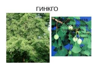 ГИНКГО