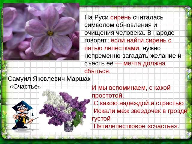 На Руси сирень считалась символом обновления и очищения человека. В народе го...