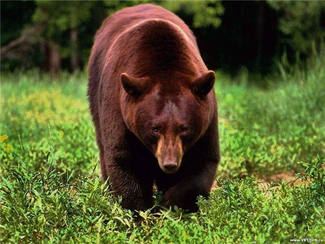 Медведь и заяц Тэваси (ненецкая сказка), Медведь и заяц Тэваси - сказки: русские, народные, народов мира