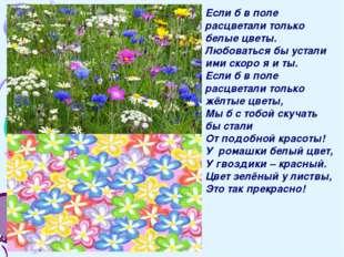 Если б в поле расцветали только белые цветы. Любоваться бы устали ими скоро