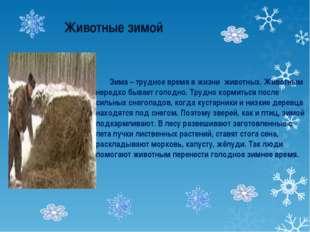 Животные зимой Зима – трудное время в жизни животных. Животным нередко бывае