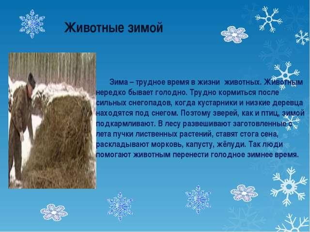 Животные зимой Зима – трудное время в жизни животных. Животным нередко бывае...