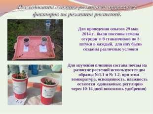 Для проведения опытов 29 мая 2014 г. были посеяны семена огурцов в 8 стаканчи