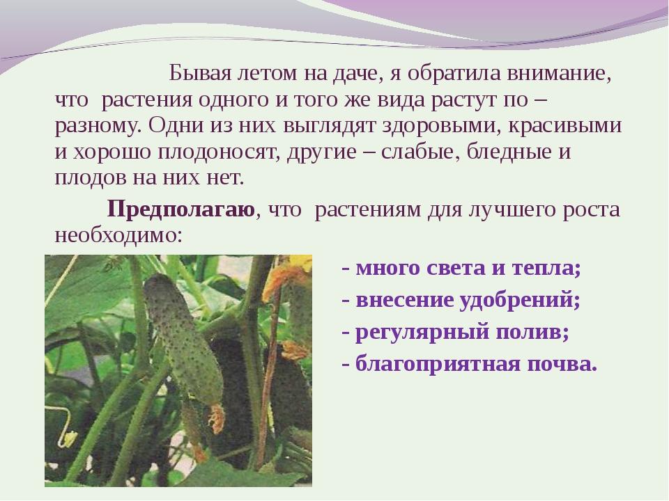 Бывая летом на даче, я обратила внимание, что растения одного и того же в...