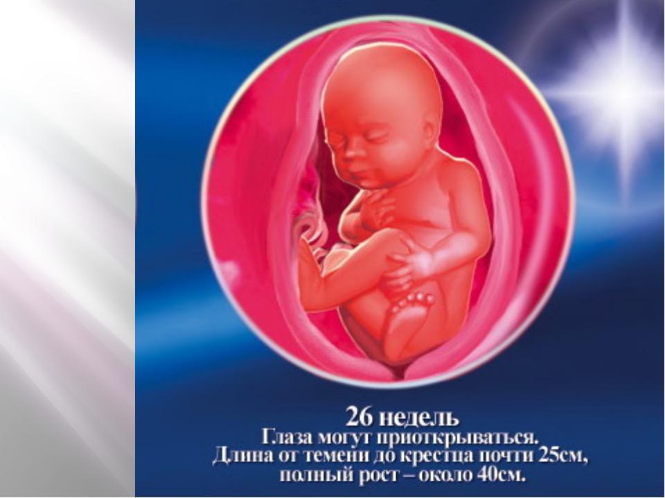 Что происходит в 26 недель беременности