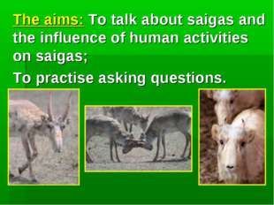 The aims: To talk about saigas and the influence of human activities on saig