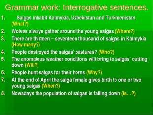 Saigas inhabit Kalmykia, Uzbekistan and Turkmenistan (What?) Wolves always g