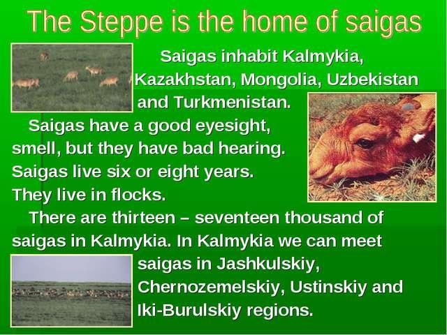 Saigas inhabit Kalmykia,  Kazakhstan, Mongolia, Uzbekistan and Turkm...