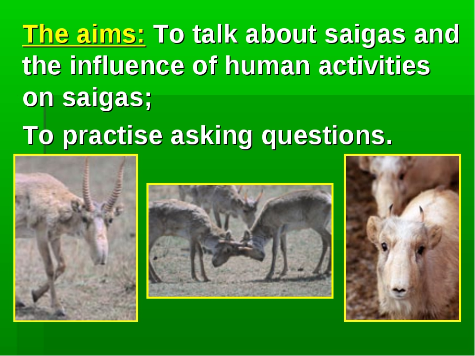 The aims: To talk about saigas and the influence of human activities on saig...