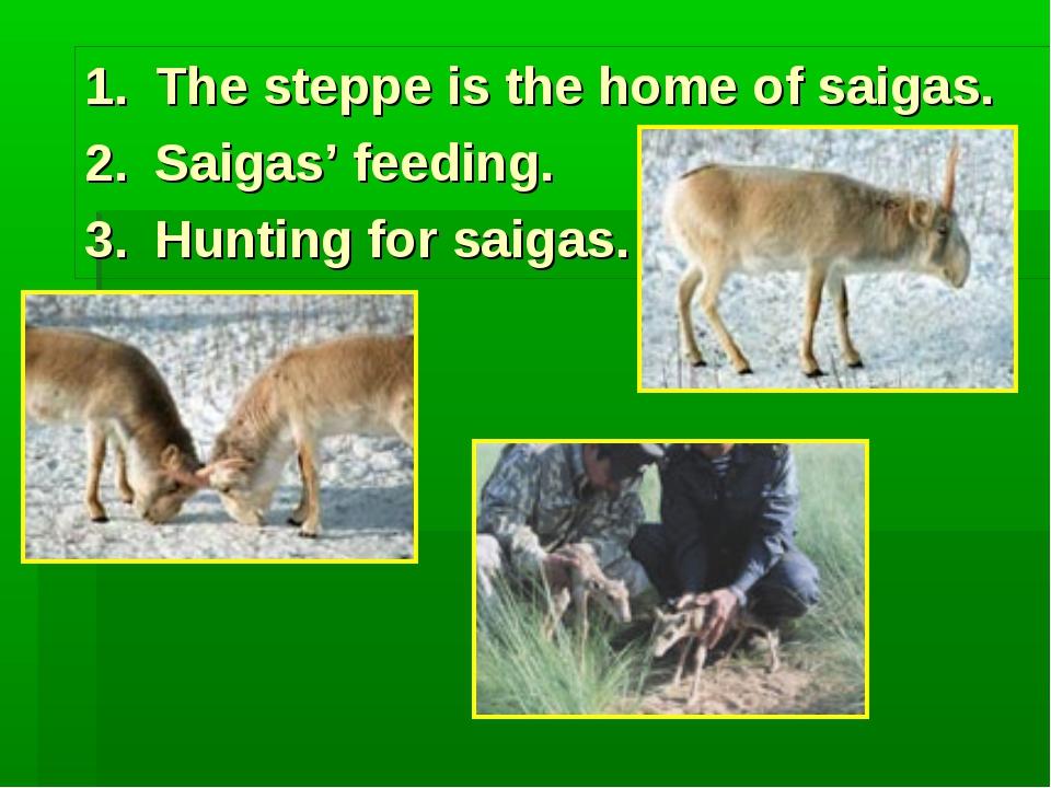 The steppe is the home of saigas. Saigas' feeding. Hunting for saigas.