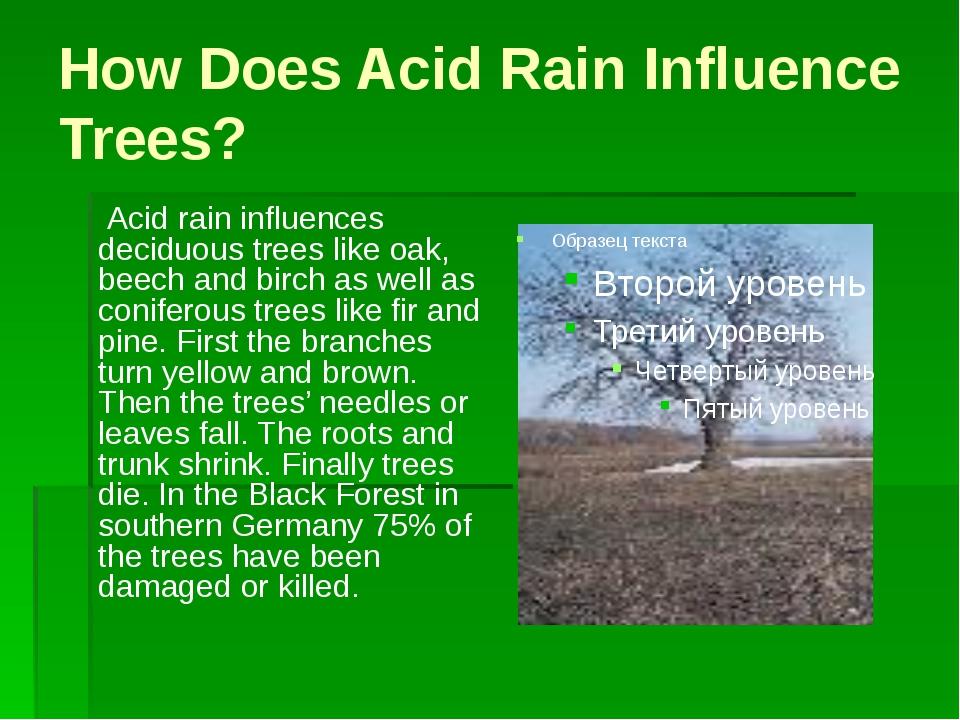 How Does Acid Rain Influence Trees? Acid rain influences deciduous trees like...