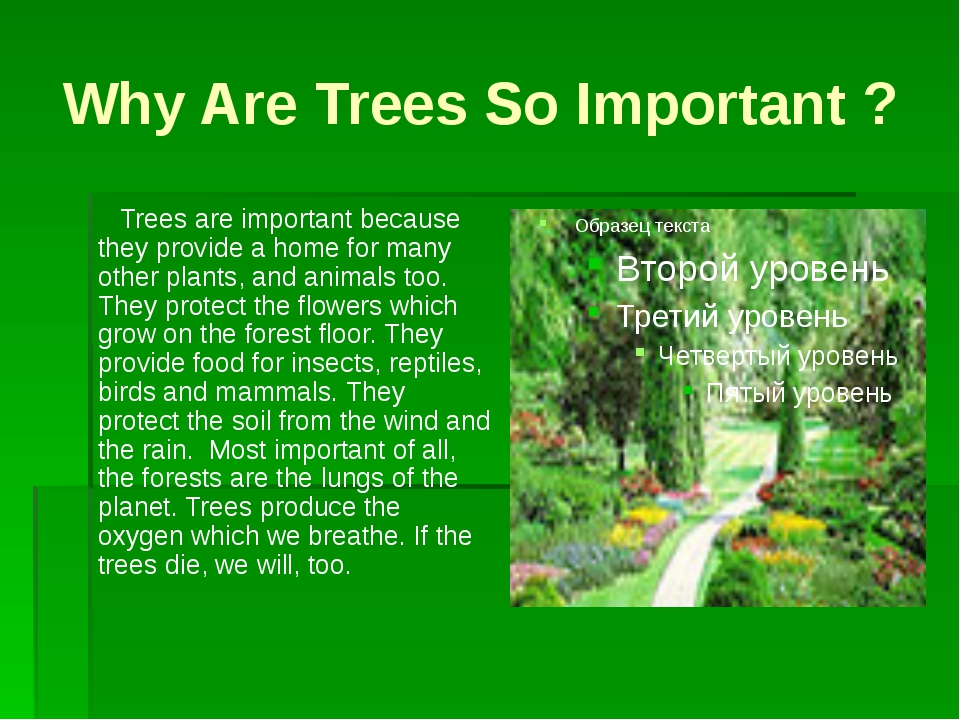 Why Are Trees So Important ? Trees are important because they provide a home...
