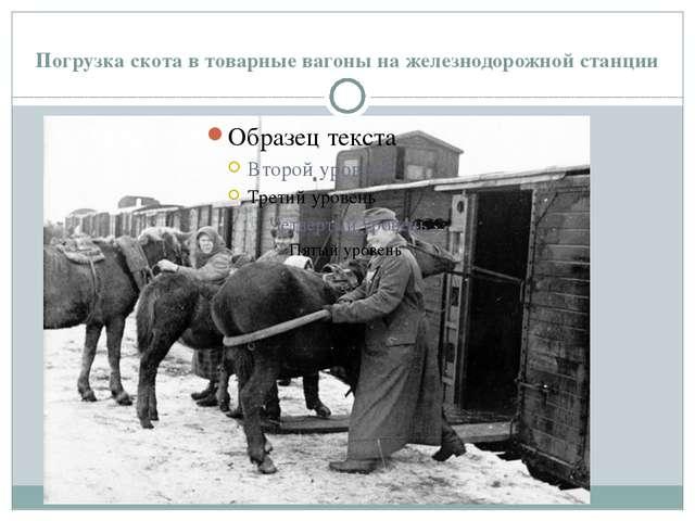 Погрузка скота в товарные вагоны на железнодорожной станции