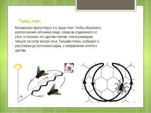 Танец пчел Математика присутствует и в танце пчел. Чтобы обозначить расположе