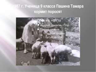 1987 г. Ученица 9 класса Пашина Тамара кормит поросят