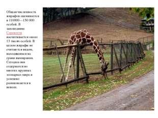 Общая численность жирафов оценивается в 110000—150 000 особей. В заповеднике