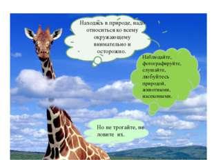 Находясь в природе, надо относиться ко всему окружающему внимательно и осторо