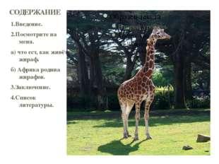 1.Введение. 2.Посмотрите на меня. а) что ест, как живёт жираф. б) Африка роди